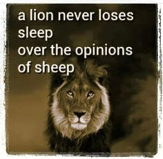 A Lion never loses sleep over the opinions of sheep.
