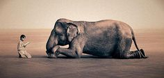 Penny Jackson says, This is by Gregory Colbert, not Nick Brandt. Sorry pinners ! Nick Brandt, Zoo 2, Yoga Shop, Gregory Crewdson, People Reading, Wale, Elephant Love, Elephant Images, Elephant Ears