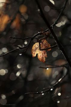 Discovered by Voldie. Find images and videos about autumn, fall and leaves on We Heart It - the app to get lost in what you love. Dark Autumn, Autumn Day, Winter, Autumn Harvest, Autumn Tumblr, Foto Macro, Autumn Aesthetic, Mabon, Autumn Photography