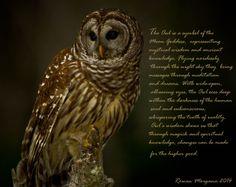 Magickal Owl Lore www.sacredwicca.com