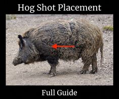 Texas Flag Wild Hog Vinyl Sticker Decal Hunting pig boar sow hunt state