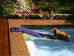 Summer isn't fun if you can't swim!  Something like this can help older dogs in and out of the water...