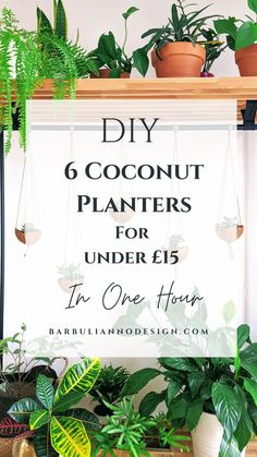 COCONUT SHELL HANGING PLANTERS DIY for under £15. The easiest DIY project ever and it looks so damn cute. :)   #coconutdiy #coconutshellplanter #diyplanter #diycoconutflowerpot #easyplantsdiy #hangingplanterdiy #cheapdiyplants