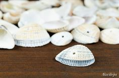 Muszle muszelki 1.5-2cm 20g 31szt. Minerals, Shells, Beaded Necklace, Beads, Preschool, Conch Shells, Beaded Collar, Beading, Conchas De Mar