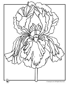 Flower Coloring Pages: Spring Flowers Iris Flower Coloring Page – Fantasy Jr.