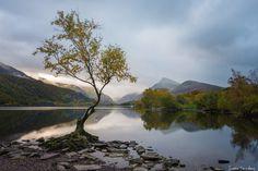 Lone Tree - Wales - Welsh beauty