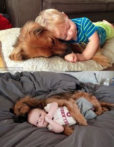adorables perros