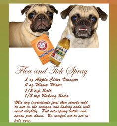 Flea and Tick Spray: - Pet Health Dog Care Tips, Pet Care, Puppy Care, Dog Flea Remedies, Flea Remedy For Dogs, Flea Bath For Dogs, Flea Medicine For Dogs, Itchy Dog Remedies, Home Remedies For Fleas