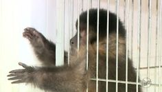"""""""O Grito do Bicho"""": Polícia investiga quadrilha de tráfico de animais ..."""