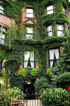 Ivy covered brownstone in Boston Beautiful Homes, Beautiful Places, Ivy House, In Boston, Boston Town, Boston Common, Boston Strong, The Places Youll Go, Exterior Design