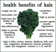 Top 10 Health Benefits of Kale: Along with the effect of antioxidants on the body, Kale also has the effect of preventing cancerous formations in the body.