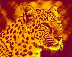 Leopard Digital Art by Jane Schnetlage