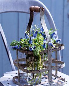 Blauwe druifjes (Muscari) met kruidentakjes in brocante flessenrek. Fotografie: Erik van Lokven. Styling: Jet Krings/Living at Home/Hollandse Hoogte.