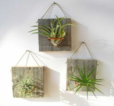 Set of Three SMALL FORM Air Plant and Barn Wood Grab von NiaCraft