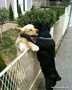 This is true friendship