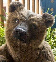 """Ben, OOAK Artist realistic teddy bear 21"""" long by Lisa Heiland of lbbears"""