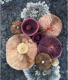jill bliss forages flora to form magical mushroom medleys