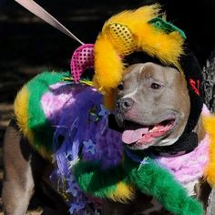 So pretty! From My Pit Bull is Family.