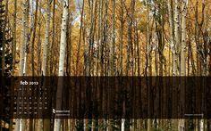 #February Forest #desktop #calendar  Free download, enjoy!