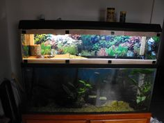 my 55 gallon eastern painted turtle set up with homemade turtle topper - Indoor Setups.Aquariums and Tubs - Turtle Times Forums
