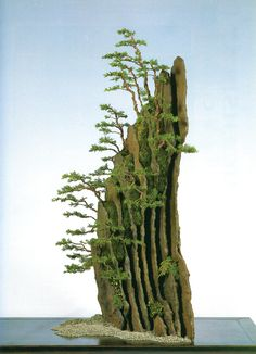 Bonsai Bark | Promoting and Expanding the Bonsai Universe