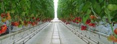 Maximizing Hydroponic Crop Production