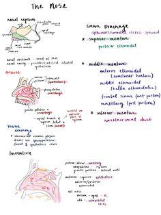 Ear #anatomy #medschool #medstudent #notes #medical ...