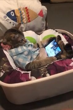 cat videos Cute Cats Official Cat Lovers Visit our - cat Cute Funny Animals, Cute Baby Animals, Animals And Pets, Funny Cats, Cute Dogs, Cute Animal Humor, Cute Cats And Kittens, I Love Cats, Crazy Cats