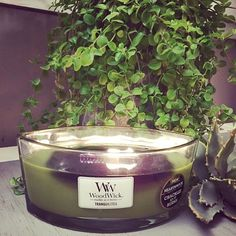 La bougie ELLIPSE Tranquilitea de chez WoodWick : le meilleur moyen de passer une après-midi zen et détendue... Essayez! Disponible chez @candlestorelyon ! (📷 @candlestorelyon ) #woodwick #yankeecandle #yankeestore #lyon #lyonnais #bougie #bougieparfumee #ellipse #fleuriste #fleur #verdure #woodwickcandle #ciresoja #soy #artetdecoration