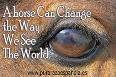 Indeed, horses have a language of their own, and unfortunately numerous of us are less aware of it as we should be. It's a big mistake to not really find out their language, as it could mean issues for us over time. Every swivel of the ear(s), hip movement, tail move and facial expression means …