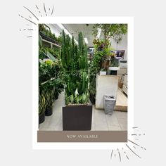 """Planter Resource Inc. 🌿 on Instagram: """"Stuck staring at a blank screen? Let the mental block win again OR start fighting back. Introduce something new and exciting to clients.…"""" Something New, Manhattan, Garden Design, Planters, Let It Be, Instagram, Landscape Designs, Plant, Window Boxes"""