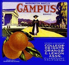 Claremont College Heights Varsity Baseball Orange Citrus Fruit Crate Label Print