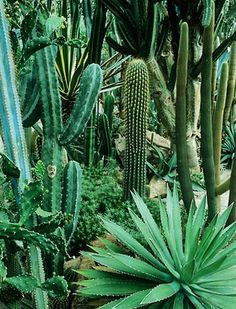 cactus jungle #inneranimal #spirithoods