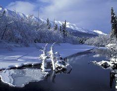 Christmas Nature 5