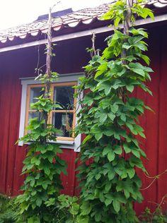 Pergola Above Garage Door Refferal: 9417766103 Pergola With Roof, Covered Pergola, Diy Pergola, Pergola Kits, Backyard Ideas For Small Yards, Home Vegetable Garden, Big Garden, Pergola Lighting, Flowers Perennials