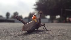 Golden Age of Insect Aviation: The Great Grasshoppers on Vimeo