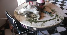 10+ Times Cats Found Catnip, And Cat.exe Stopped Functioning | Bored Panda