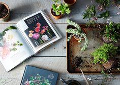 dicas, espécies de plantas, inspirações e indicação de produtos   confira tudo que você precisa saber para começar a praticar Jardinagem em casa sem medo: https://www.bimbon.com.br/inspire-se/20-ideias-jardinagem?utm_content=buffer70e44&utm_medium=social&utm_source=pinterest.com&utm_campaign=buffer