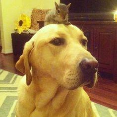 Cachorro salva e esquilo órfão e dupla se torna melhores amigos | Mundoidão