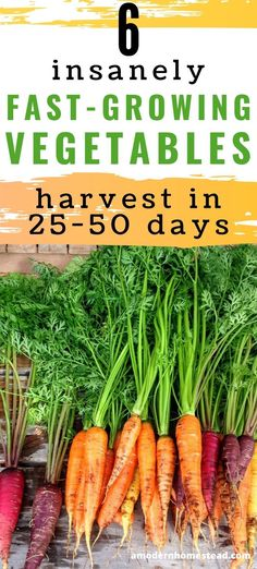 Fast growing vegetables are perfect for people who want to harvest food quickly no matter the reason Find out which vegetables you can start today and harvest in as little as 25 days Gardening Homesteading VegetableGardening GrowYourOwnFood