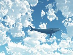 Blue Whale Wallpapers  Wallpaper  1920×1080 Images Of Whales Wallpapers (54 Wallpapers) | Adorable Wallpapers