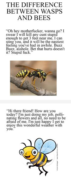 Difference Between Wasps and Bees. The language is bad but this is so true! After being stung I can totally relate!