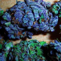 #medical #marijuana #420 #weed #MMJ #MJ #herb #health #plants
