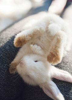 Petit lapin ♡