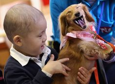 26 Reasons Therapy Dogs Are The Best