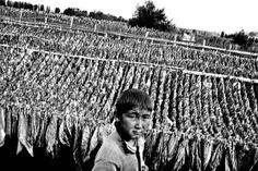 Kazakhstan: Migrant Tobacco Workers Cheated, Exploited | Human Rights Watch