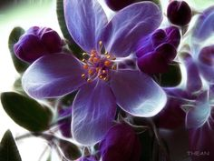 HD Widescreen Wallpapers - flower backround, 2560x1920 (1081 kB)