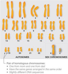 a great website with information about what can go wrong during mitosis/meiosis