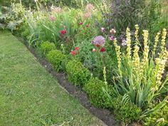 Flower plot on the plot. 27.6.2013