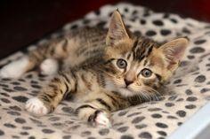 Kitty camo